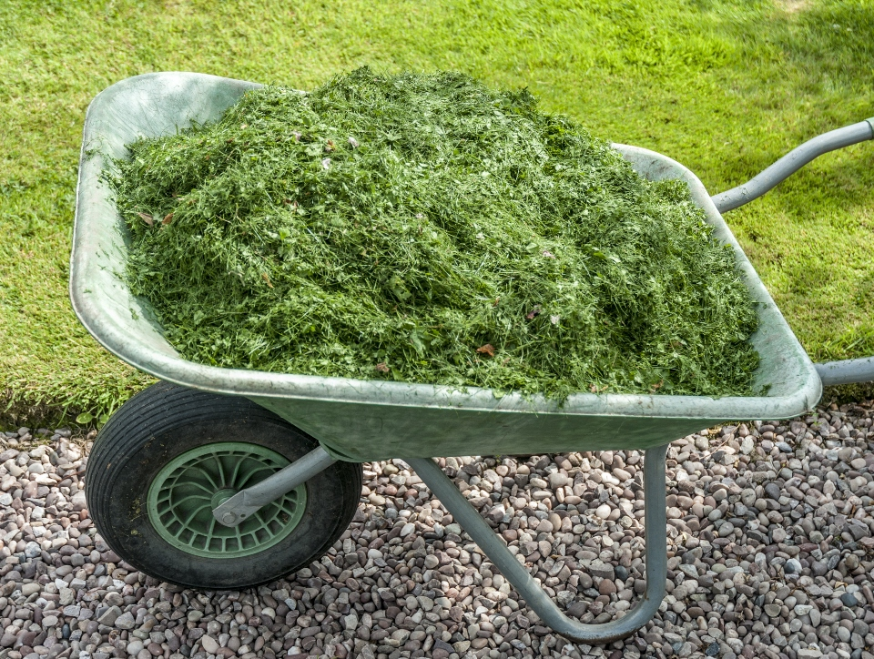 Wheelbarrow of grass cuttings
