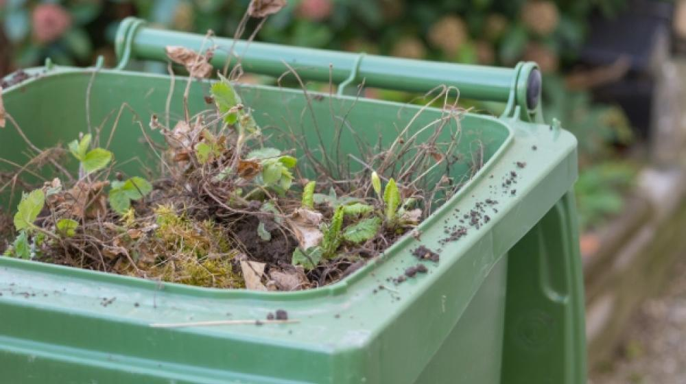 A full green garden waste bin containing cut grass and twigs
